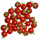 Tomatines